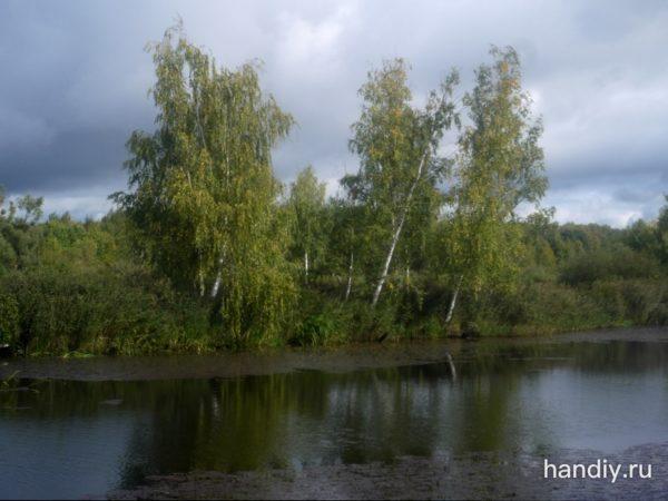 Фотография Березы на берегу реки Волга