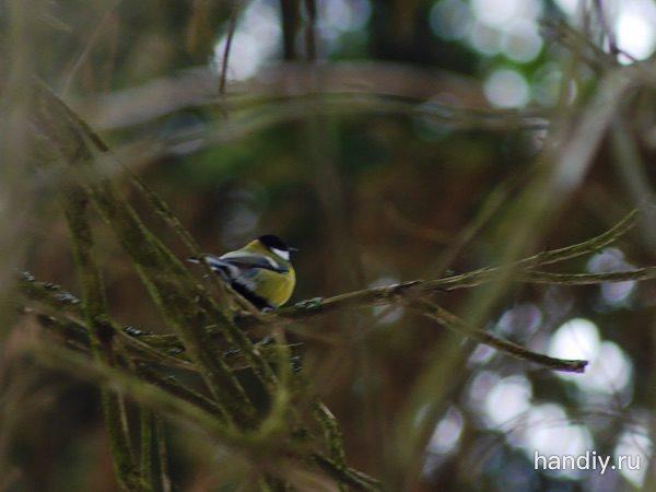 Фотография желтая птица синица на ветке дерева в лесу зимой